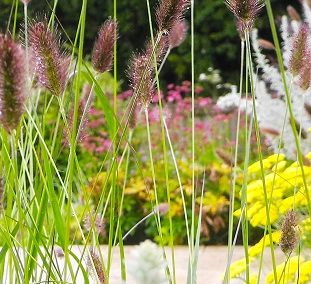 Glasgow suburban garden, East Kilbride