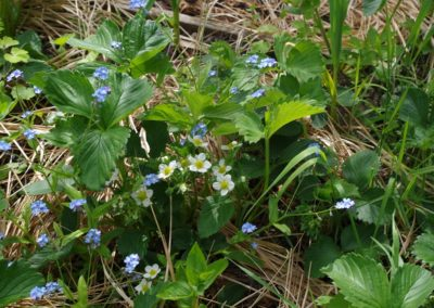children strawberry patch and wildflowers