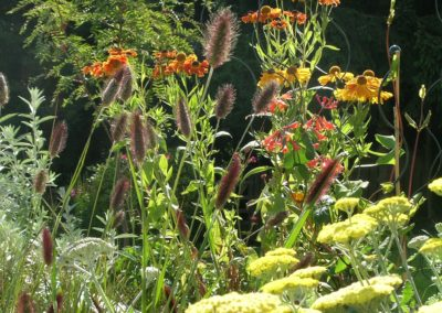 echinacea and rowans