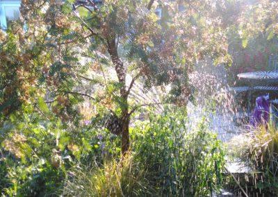 rowan flowering sunlight