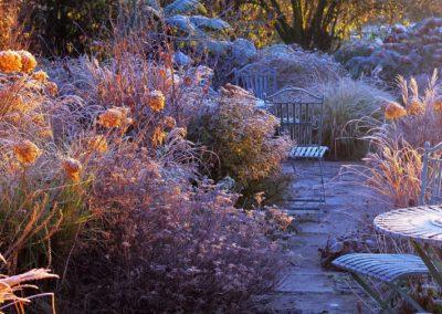 winter garden grasses and hydrangeas
