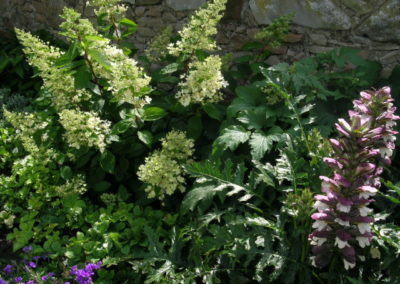 Cottage Garden Ayr 1