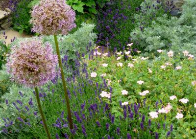Cottage Garden Ayr Planting Details Alliums