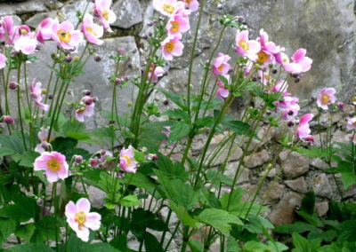 Wall Planting Cottage Garden