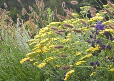 wild grass bloom display